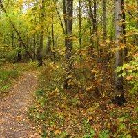 Осень уже не понарошку IMG_2266 :: Андрей Лукьянов