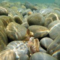 Морские собачки :: Сергей