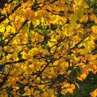 Осенний свет :: Ирина Приходько