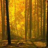 По ту сторону леса :: Влад