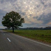 Одинокое дерево :: Александр Хорошилов