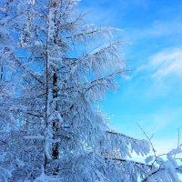 зима :: андрей ралько
