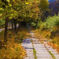 Осень в городском парке :: Николай Николенко