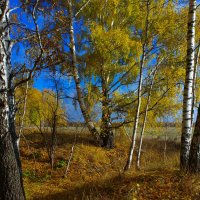 Осенние мотивы уходящего дня :: Роман Царев