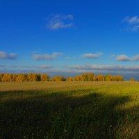 Поле ... Осень ... Лес :: Роман Царев