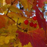 Красно-желтая осень :: Роман Царев