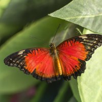 Бабочка :: Богдан Петренко