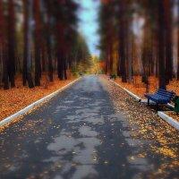 Осень золотая - холодная сырая. :: Сергей Адигамов