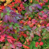 Осени краски :: Nikolay Monahov