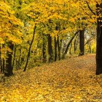 Осенняя дорога :: Андрей Нибылица