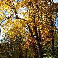 Золотая осень :: Денис Матвеев