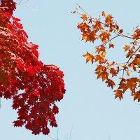 красное и желтое :: Ingwar