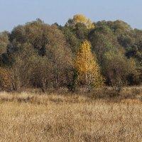краски природы :: Геннадий Свистов