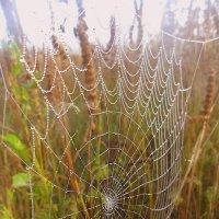 Осенние паутинки :: лидия Кашицина