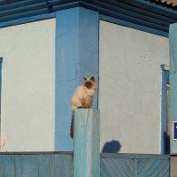 Кот на заборе :: Мария Лебедева