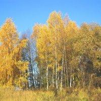Золото осени :: Андрей Снегерёв