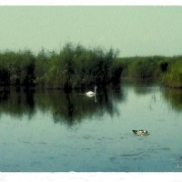 Лебедь на пруду :: Анна Бойнегри