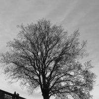 Дерево :: Людмила Быстрова