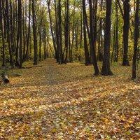 Осень,  что ли? IMG_2424 :: Андрей Лукьянов