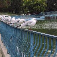 Чайки в парке :: Людмила