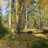 Лес осенью . :: Мила Бовкун