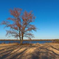 Берег реки :: Denis Aksenov