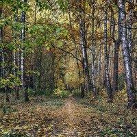 на рассвете в лесу :: Светлана Васильева