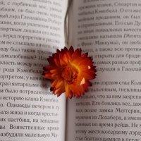 Цветок в книге :: Алина Зангиева
