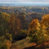 Осенний лес :: Сергей *