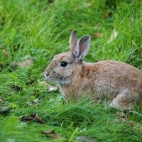 Кролик :: Dmitry Kovshick