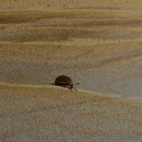 Колорадский жук :: Полина Гудина
