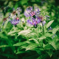 цветы :: Яна Возбранная