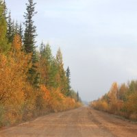 по дороге на Усть-Кут :: Таня Фиалка