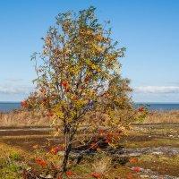 Балтика :: Владимир Лисаев