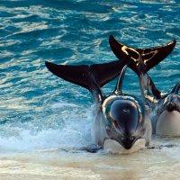 Дельфины :: Lika Shakhmatova