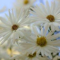 Нежные цветы осени :: Владимир Голушко