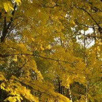 золотое мгновение осени :: Маргарет мм