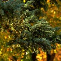 Краски осени :: Marina Timoveewa
