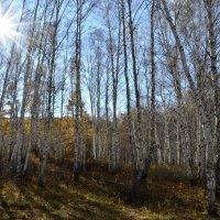 А солнце в октябре уже не греет..... :: galina tihonova