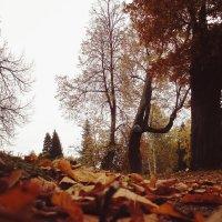 Осень, осень... :: Алеся Денежкина