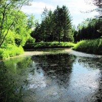 Заросший пруд :: Самохвалова Зинаида