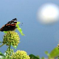 Бабочка и облако. :: Alexander Andronik