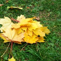 Потеряла Осень жёлтенький букетик... :: Milocs Морозова Людмила