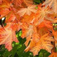 Ходит осень в нашем в парке... :: Ирина Рачкова