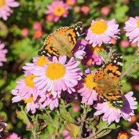 Две бабочки и пчела :: Юрий Яловенко