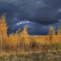 Краски осени :: OlegVS S