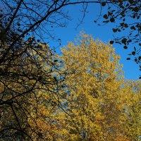 Северодвинск. Осень (5) :: Владимир Шибинский