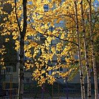 Северодвинск. Осень (4) :: Владимир Шибинский