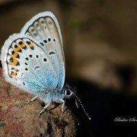 бабочка!!! :: סּﮗRuslan HAIBIKE Sevastyanovסּﮗסּ