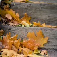 слезы осени :: Евгения Порядина